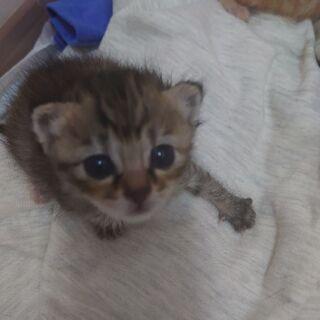 とてもキレイで可愛い子猫です。
