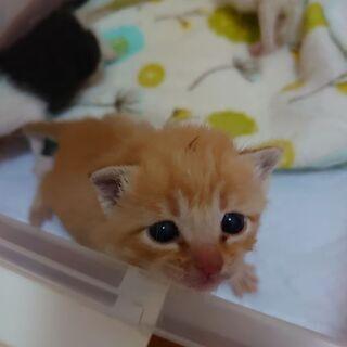 可愛い子猫です。保健所届け済みです。