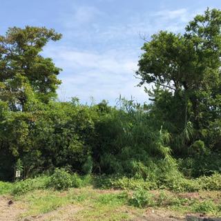 樹木の剪定、伐採、抜根が得意な方、経験者