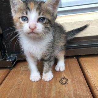 4月18日生まれ子猫