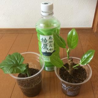 綺麗な観葉植物 No5