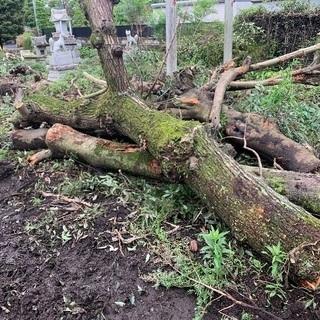 伐採した木 薪 木工細工 カービング 値下げ 先着優先
