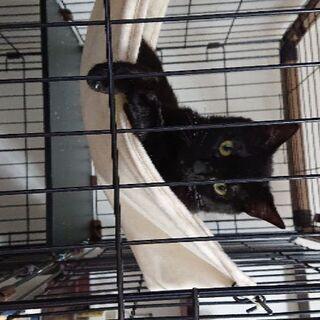 推定11ヶ月の黒猫ちゃん♀です。