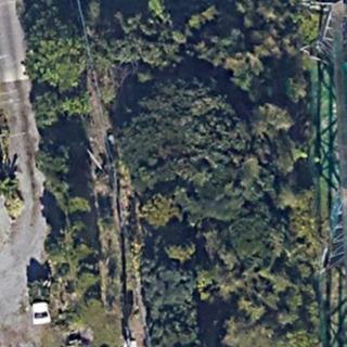 立木 杉 松 広葉樹 など