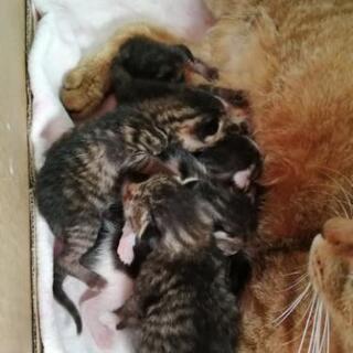 5月19日生まれ仔猫の里親さん募ります