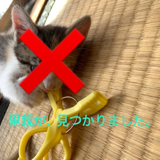 【一時、募集停止します。】子猫の、里親探しています。4匹 ※編集あり