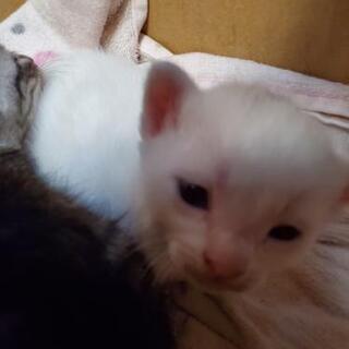 里親決定!仔猫を家族に迎えてください! − 長崎県