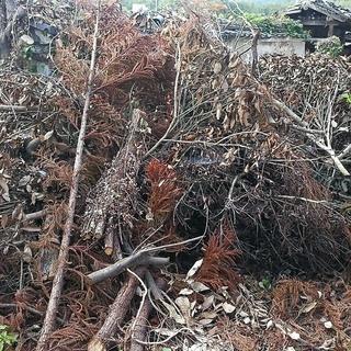 交渉中 無料 薪ストーブや燃料等にご利用下さい。伐採樹木、解体古...