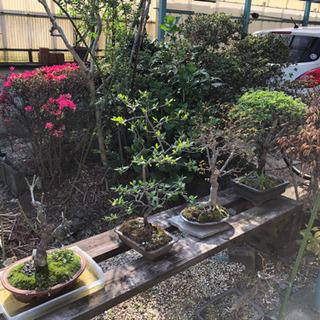 《取引中》盆栽 花 鉢植え など