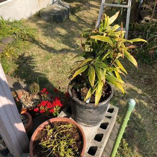 《取引中》盆栽 鉢植え 花 色々