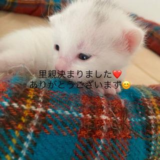 実家で子猫生まれました