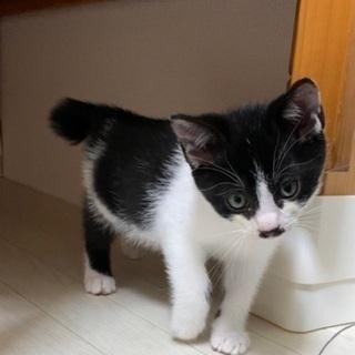生後2ヶ月の男の子 − 広島県