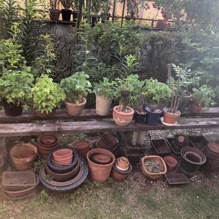 《取引中》花 鉢植え 鉢 素焼き など