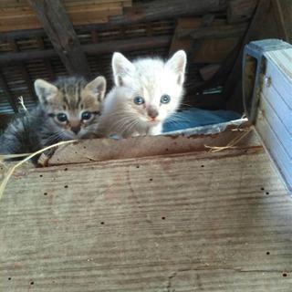 子猫助け下さい