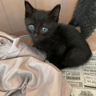 生後1ヶ月から2ヶ月の黒猫君