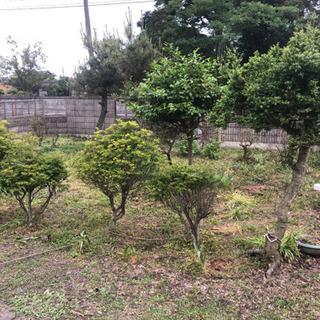 庭木、植木、差し上げます。庭園