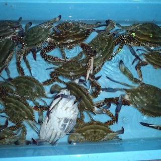 ⭐︎船 蟹すくい お願いします ⭐︎