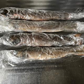 冷凍天然岩魚
