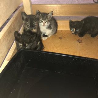 【4匹の子猫】里親を探しています。