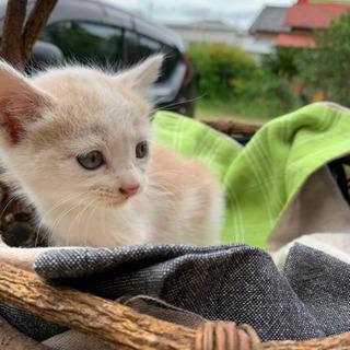 5匹の子猫の里親募集しています。