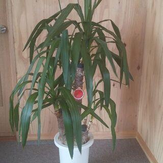 育てやすい観葉植物値下げ中