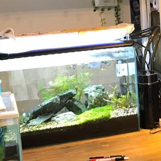 熱帯魚用 FLATLED 600ツイン 60cm水槽用 爆光 水...
