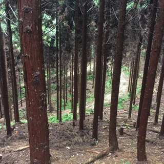 山林 立木 買取します