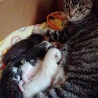 5月4日産まれの子猫チャンです😺