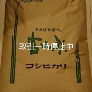 令和元年コシヒカリ(30kg)新米