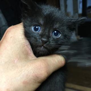 一旦受付終了とします^ ^生後1か月の仔猫2匹