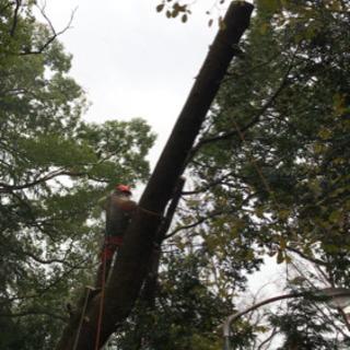 多数のご依頼ありがとうございます!木の伐採・特殊伐採承ります!