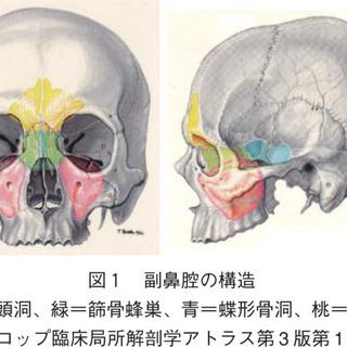 【蓄膿症・副鼻腔炎を改善!】鼻づまり・花粉症で困っている方…