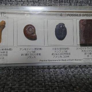 化石4種セット 500円