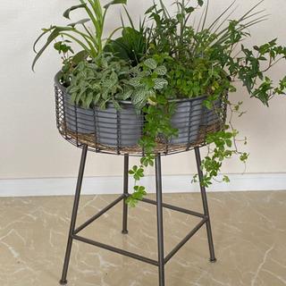 観葉植物のおまけ付きアイアンバスケットサイドテーブル