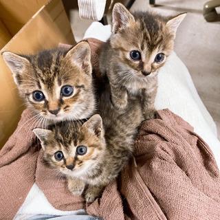 近所の野良猫4匹※問い合わせ多数の為受付終了