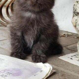 4月16日生まれの仔猫 - 深谷市