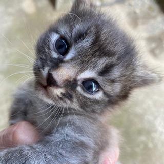 子猫3匹貰ってください。(決まりました!)