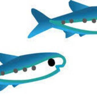 🐟お魚の加工業務🐟