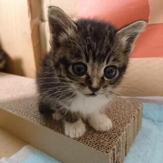 募集停止中です。元気な子猫、生後2~3週間、2匹