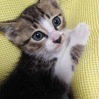 生後1か月半の子猫4兄妹