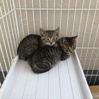 2ヵ月ぐらいの子猫ちゃん - 名古屋市
