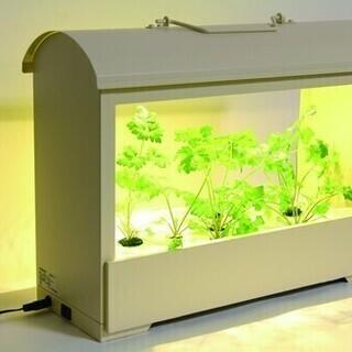 自粛が増えている中どうですか? お部屋で家庭菜園 LED 野菜栽...