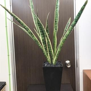 【中古】人工 観葉植物 2,000円
