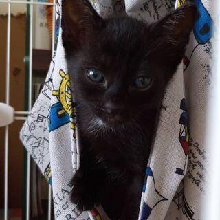 ちびちび軍団の黒猫一番のヤンチャ坊主