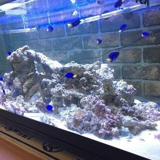 熱帯魚 ライブロック