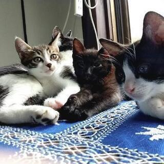 生後2ヶ月の子猫と母猫の里親さんを探しています