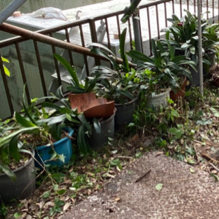 植木鉢8個