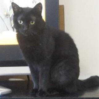 猫が大好き♡美人黒猫ひめちゃん