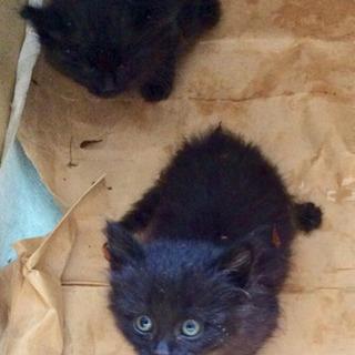 子猫二匹ペアor1匹を大切に育ててくれる方はいませんか🙇♂️