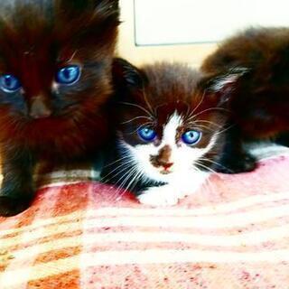 5月?日産まれ 子猫 赤ちゃん 猫